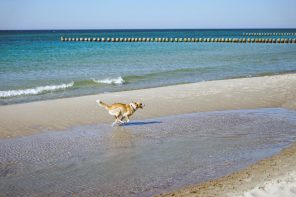 Ostsee Strandurlaub mit Hund. Ein Wochenende auf dem Darß.