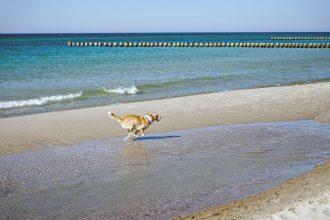 Ostsee Strandurlaub mit Hund