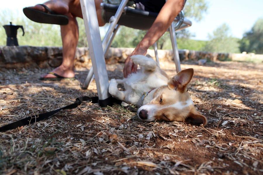 Roadtrip Kroatien Relaxen auf im Mini Camp Marusina Olive Hills