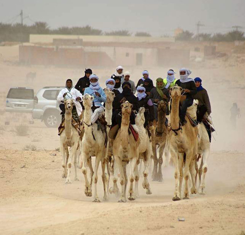 Kamelrennen in Tunesien
