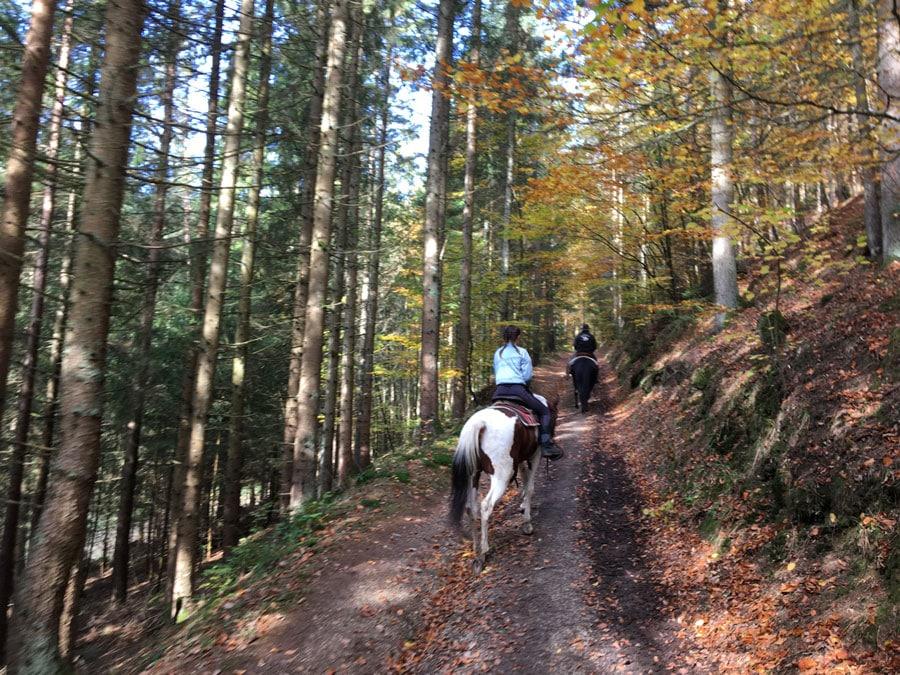 Wanderreiten Österreich den Berg hinauf