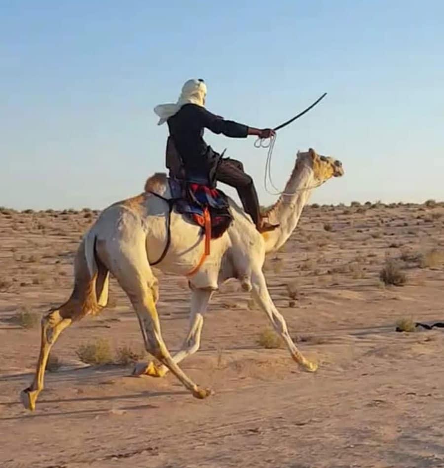 Mehari Kamelrennen in Tunesien