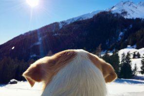 Schneeschuhwandern im Pustertal. Winterurlaub mit Hund.