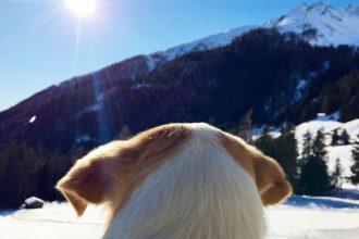 Winterurlaub mit Hund in Suedtirol